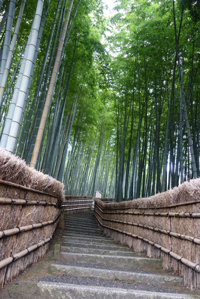 A less visited bamboo forest in Kyoto.