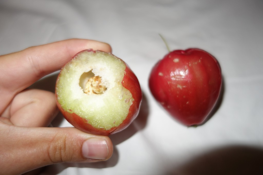 A whole Malabar apple on the right and one with the top bitten off on the left.