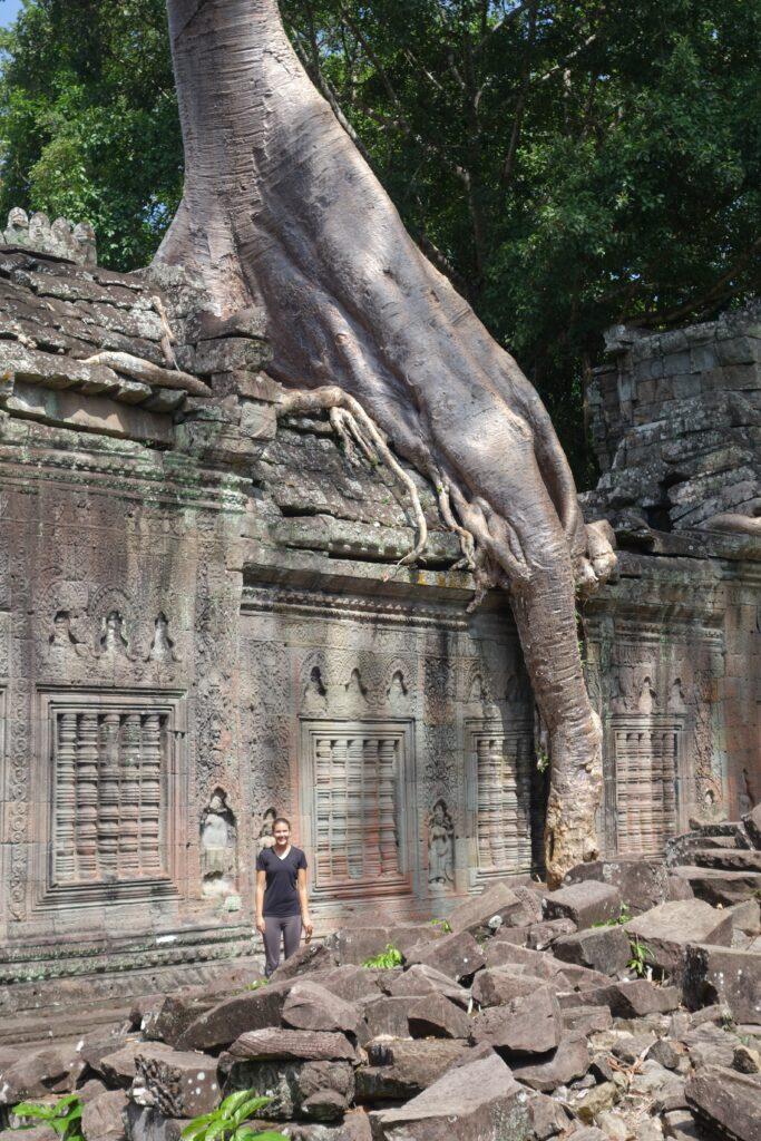 A giant strangler fig grows atop Preah Khan.