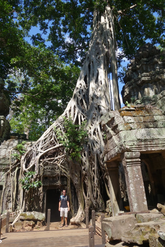 Another giant strangler fig at Ta Prohm. This is one of the more popular sites in the park.